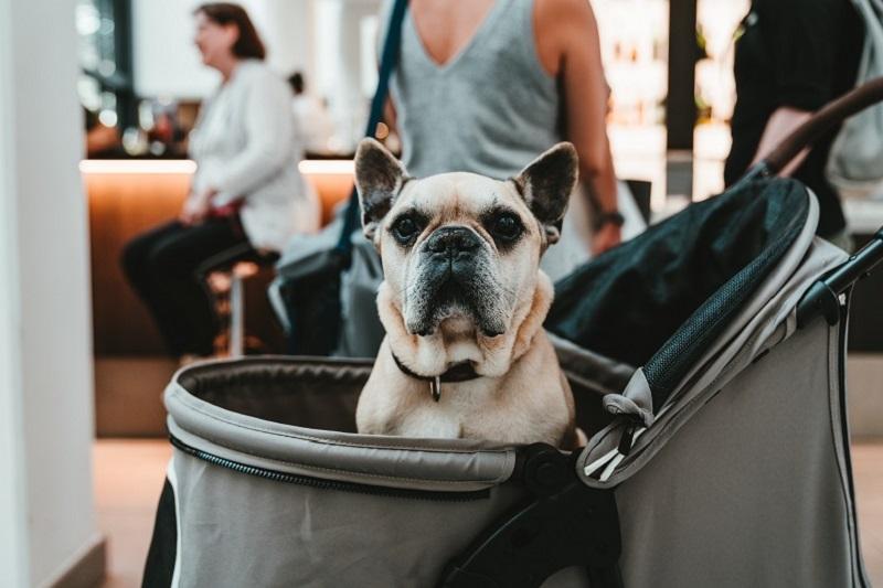Hondenbuggy Kiezen? Lees de Ultieme Hondenbuggy Gids