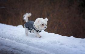 De 5 Beste Hondenbuggy's Voor Kleine Honden in 2020