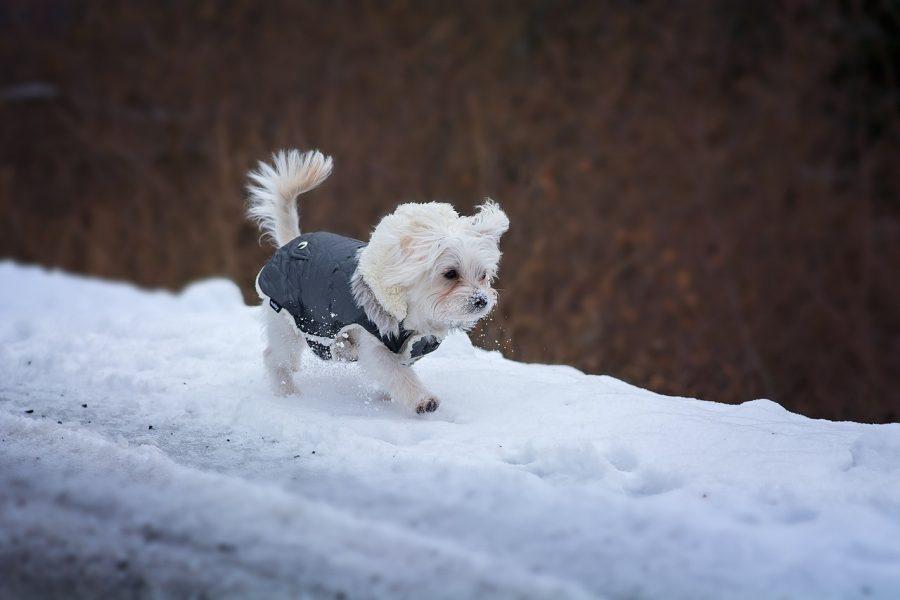 kleine hond in de sneeuw