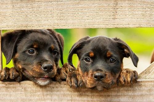 2 honden afbeelding