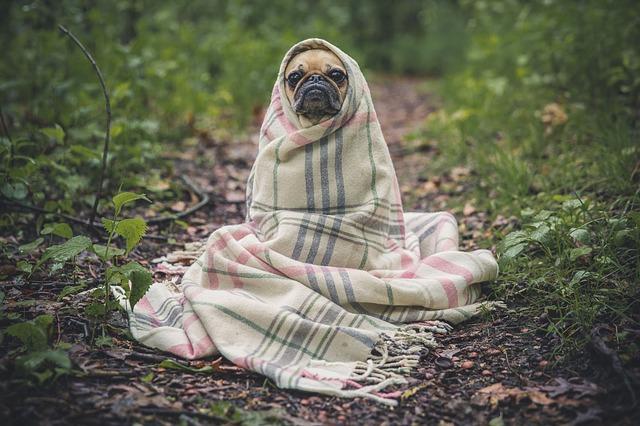 Afbeelding van een hondje die het koud heeft