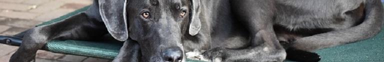 De Beste Hondenfietskar voor een Grote Hond