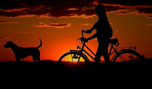 Afbeelding van een hond met vrouw en fiets