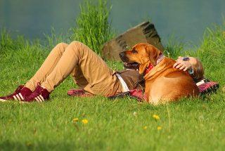 Afbeelding van een hond met baasje in het gras