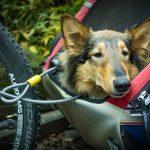 Afbeeldign van slaperige hond in een open hondenfietskar