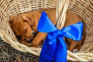Afbeelding van een puppy in een mandje