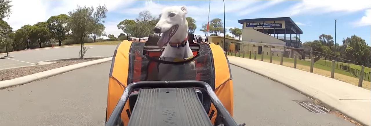 De DoggyRide Keuze-Gids: Kies jouw DoggyRide!
