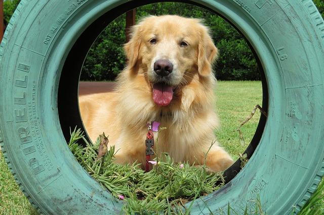 Hoe zoek je de beste Hondenfietskar met  vering uit?