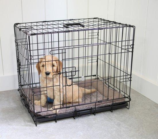 Afbeelding van kleine labrador in dichte hondenbench