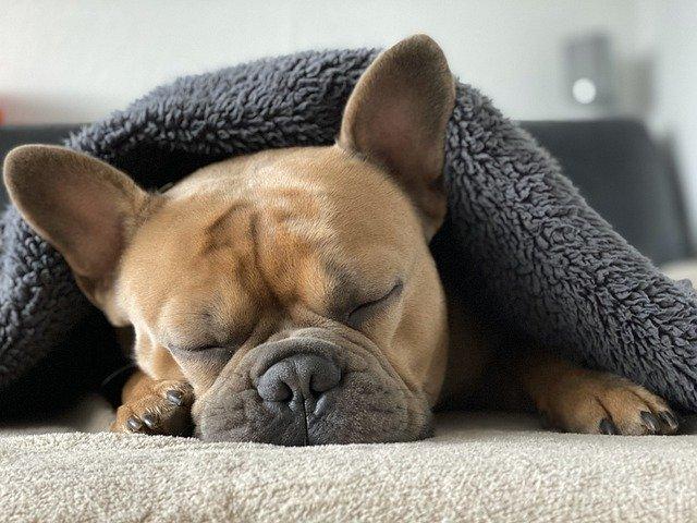 De 5 Meest Luxe Hondenbenches in 2021