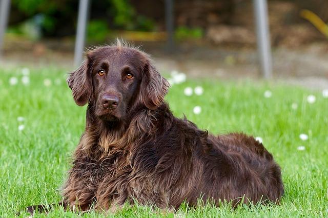 De 5 Beste Hondenbuggy's Voor Grote Honden