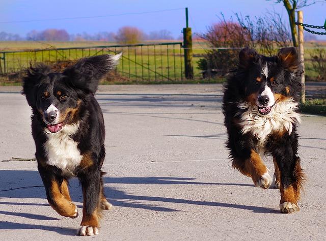 De Beste Grote Hondenbench in 2020