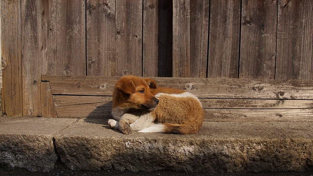 De Beste Hondenbench met Ingebouwde Kast