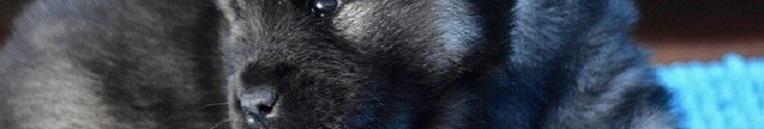 Is een koelmat met gel gevaarlijk voor je hond?