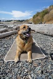 Afbeelding van een hond buiten op een mat