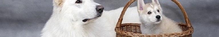 Wat is de Beste Hondenfietskar voor een Kleine Hond?