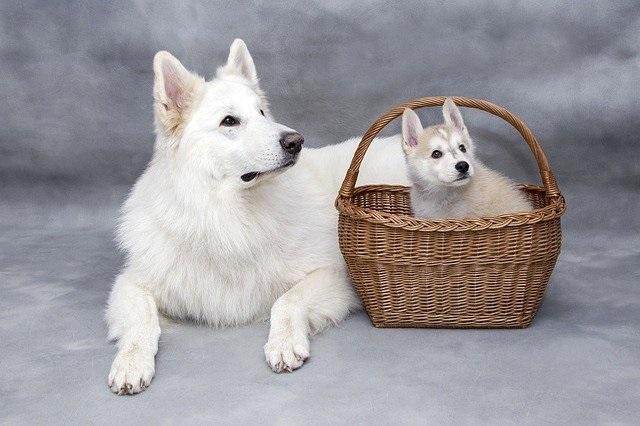 Afbeelding van een kleine hond in mandje