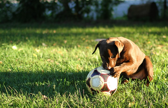 Top 5: Het beste hondenhok voor buiten