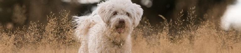 Wat is de beste GPS Tracker voor je Hond in 2021