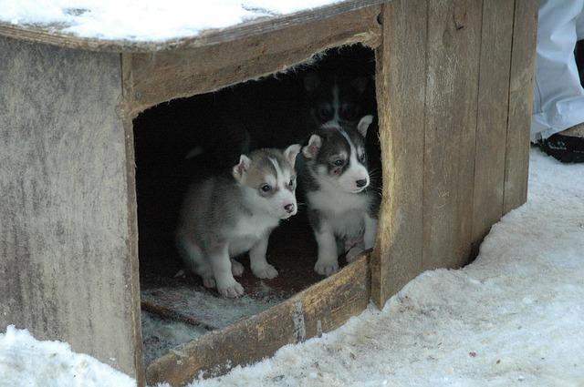 Wat is het beste Houten Hondenhok?