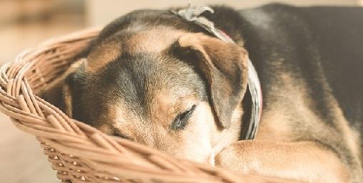 Top 4: Wat is de beste rieten hondenmand?