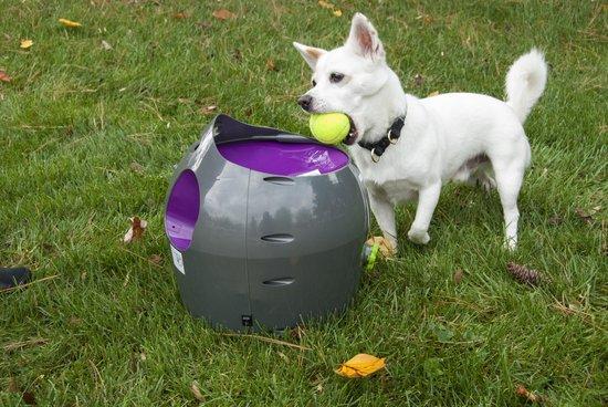 Afbeelding van hond bij de PetSafe ballenwerper