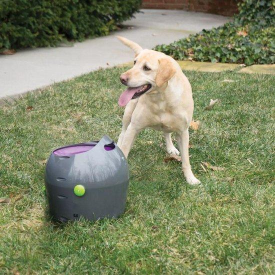 Afbeelding van de PetSafe ballenwerper met labrador
