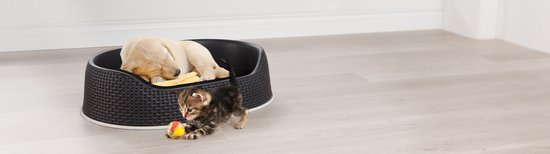 Afbeelding van de Curver Hondenmand met een puppy en kitten