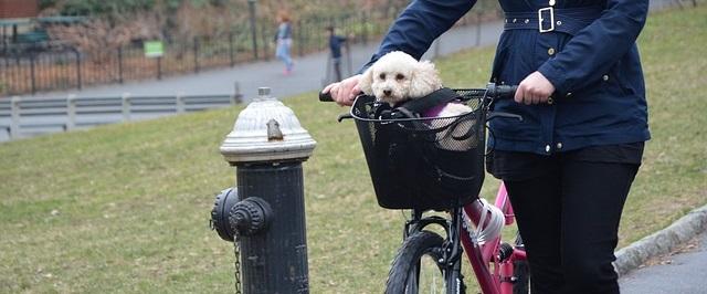 Een Hondenmand voor je Elektrische Fiets/E-bike?