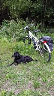 Afbeelding van een hond met een elektrische fiets