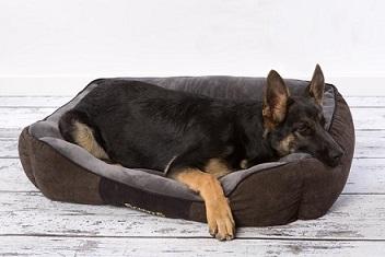 Afbeelding van de bruine Cheste hondenmand met grote hond er in