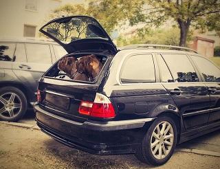 Afbeelding van twee grote honden in de auto