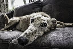 Afbeelding van een hond op de bank