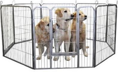 Afbeelding van de Topmast Puppyren met 3 honden erin