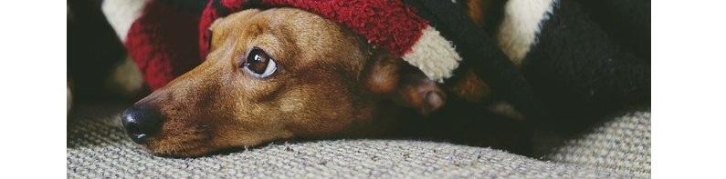 Top 5: De Beste Puppyren voor Binnen in Huis