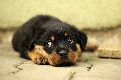 Afbeelding van een puppy op de grond