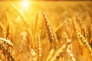 Afbeelding van graan
