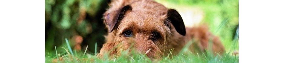 De Beste Puppyren voor buiten in de Tuin