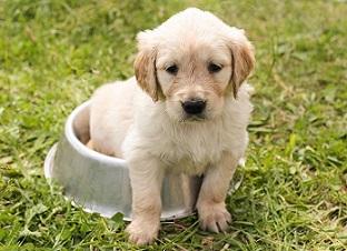 Afbeelding van een puppy in een hondenvoer bak