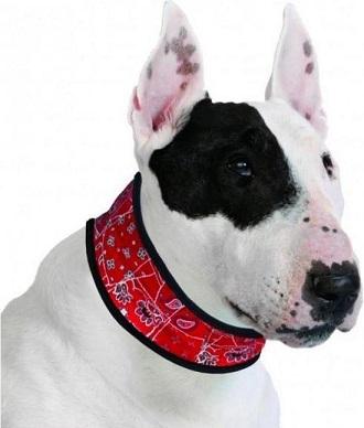 Afbeelding van een hond met de rode Aqua Coolkeeper koelband