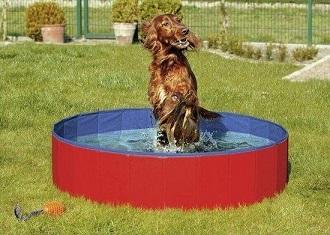 Afbeelding van een zwembad vol water met een hond