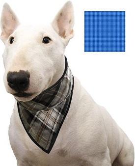 Afbeelding van een hond met koelbandana om