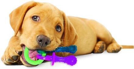 Afbeelding van een puppy met het Nylabone kauwspeeltje