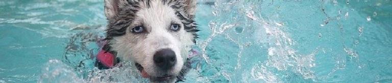 Top 5 – Het Leukste Waterspeelgoed voor je Hond