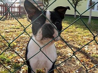 Afbeelding van een hond achter een hondenhek