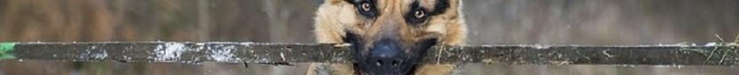 Wat is een Goede Werpstok voor je Hond?