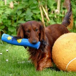 Afbeelding van een hond met een speeltje en bal