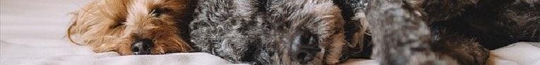 Top 10 – De Mooiste Honden ter wereld