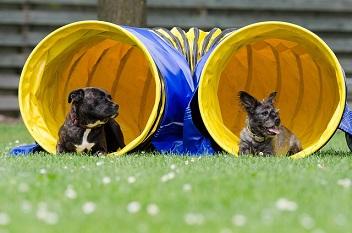 Afbeelding van een hondentunnel met twee hondjes
