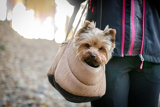 Afbeelding van een hond in een draagzak